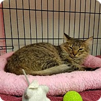 Adopt A Pet :: Pattie - Albuquerque, NM