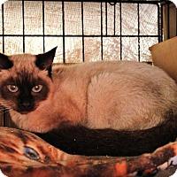 Adopt A Pet :: Luna - San Ysidro, CA