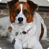 Adopt A Pet :: Sebastian - Charlotte, NC