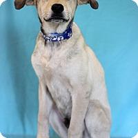 Adopt A Pet :: UB40 - Waldorf, MD