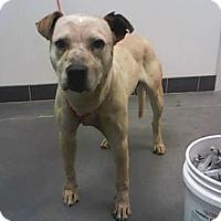 Adopt A Pet :: KC - Farmington, NM