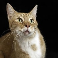Adopt A Pet :: Anabell - Gainesville, FL