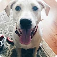 Adopt A Pet :: Ben - Huntley, IL