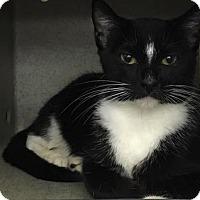 Adopt A Pet :: Becca - Eureka, CA