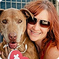 Adopt A Pet :: Tommy Tucker - Acton, CA