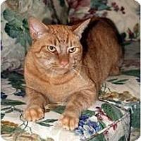 Adopt A Pet :: Eddie - New Port Richey, FL