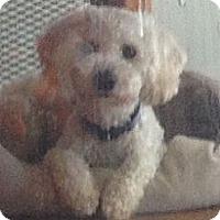 Adopt A Pet :: Bency - South Gate, CA