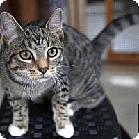 Adopt A Pet :: King - Lancaster, MA
