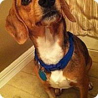 Adopt A Pet :: Bonnie - Palm Bay, FL