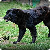 Adopt A Pet :: Gretel - Vancleave, MS