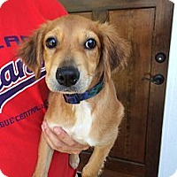 Adopt A Pet :: Addie - Windam, NH