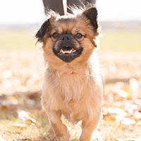 Adopt A Pet :: Harley - Saskatoon, SK