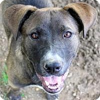 Labrador Retriever Mix Dog for adoption in Memphis, Tennessee - Ava