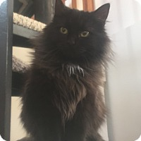 Adopt A Pet :: Noelle (Shy & Sweet) - Arlington, VA