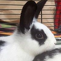 Adopt A Pet :: Ross - Farmington Hills, MI