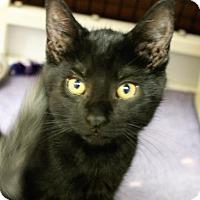 Adopt A Pet :: Halibut - Medina, OH