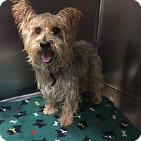 Adopt A Pet :: Chowder - Westminster, CA