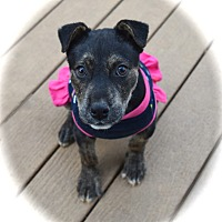 Adopt A Pet :: Deena - Ijamsville, MD