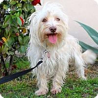 Adopt A Pet :: Savannah - Los Angeles, CA