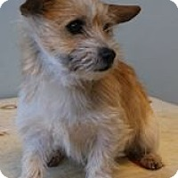 Adopt A Pet :: Dasher - Shawnee Mission, KS