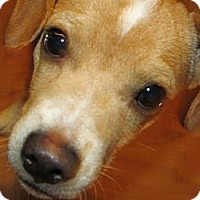 Adopt A Pet :: Tiny - Marion, IN