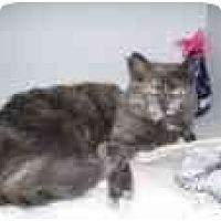 Adopt A Pet :: Cindy - North Boston, NY
