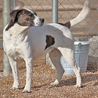 Beagle Mix Dog for adoption in Hooksett, New Hampshire - MeeMee