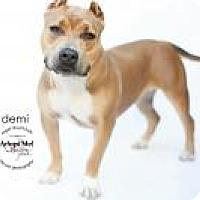 Adopt A Pet :: DEMI - LOS ANGELES, CA