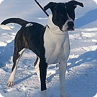 Adopt A Pet :: Maria - Cherry Valley, NY