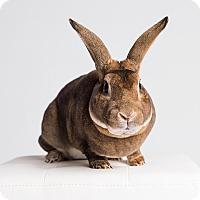 Adopt A Pet :: Prince George of Easteria - Ogden, UT