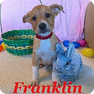Shepherd (Unknown Type) Mix Puppy for adoption in Gainesville, Georgia - Franklin