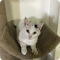 Adopt A Pet :: Izzy - Butner, NC