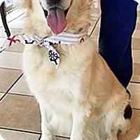 Adopt A Pet :: Eko - BIRMINGHAM, AL