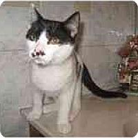 Adopt A Pet :: Oliver - Catasauqua, PA