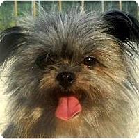 Adopt A Pet :: Scruffles - Washington, NC