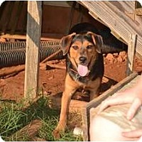 Adopt A Pet :: Macy - Douglasville, GA