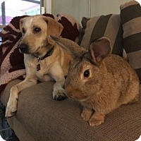 Adopt A Pet :: Gertrude - Williston, FL