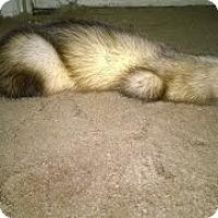 Adopt A Pet :: Everett - Spokane Valley, WA