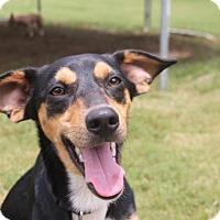 Adopt A Pet :: Teeko - Homewood, AL