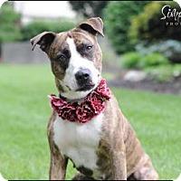 Adopt A Pet :: Meeko - Dublin, OH