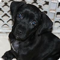 Adopt A Pet :: Reya - Miami, FL