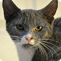 Adopt A Pet :: Audrey (Low adoption fee!) - New Smyrna Beach, FL