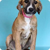 Adopt A Pet :: Ingrid - Waldorf, MD