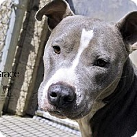 Adopt A Pet :: Grace - South Bend, IN
