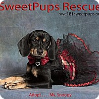 Adopt A Pet :: Ms. Snoopy - Vidor, TX