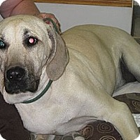 Adopt A Pet :: Bella - Roy, WA