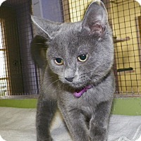 Adopt A Pet :: Maggie - Dover, OH