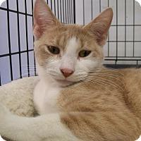 Adopt A Pet :: Nala - Norwich, NY