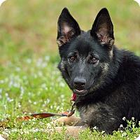 Adopt A Pet :: Nicki - Dacula, GA