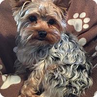 Adopt A Pet :: Rockie - Canton, IL